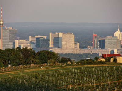 Wien | Vineyard and Donaucity