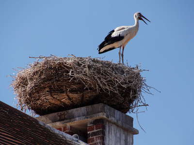 Rust | Chimney with stork nest