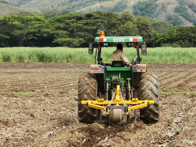 Cauca Valley  |  Sugar cane cultivation