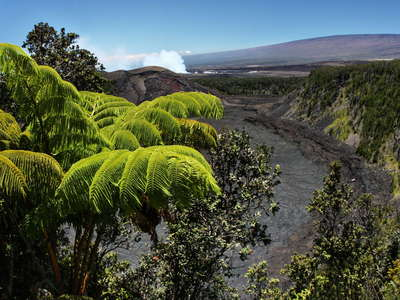 Hawai'i Volcanoes NP  |  Tree fern and Kīlauea Iki