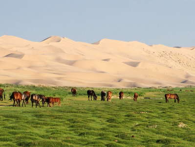 Khongoryn Els  |  Dune field with cattle and horses