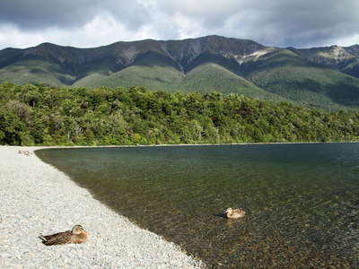 Lake Rotoiti  | Kerr Bay with ducks