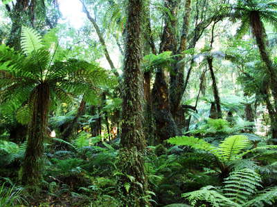 Lake Moeraki  |  Temperate rainforest