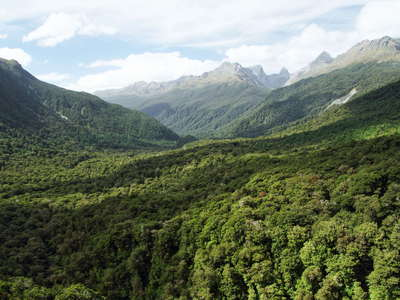 Fiordland NP  |  Hollyford Valley