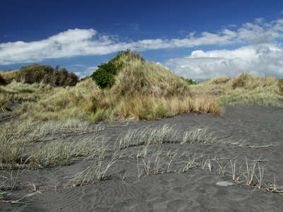 Komene Road  |  Dune vegetation