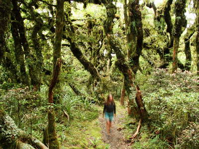 Egmont NP  |  Mountain forest