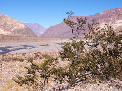 Valle Mendoza with creosote bush