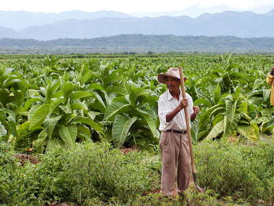 Valle de Lerma  |  Tobacco cultivation