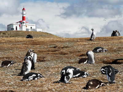 Isla Magdalena  |  Penguins and lighthouse