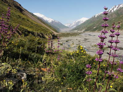 Upper Zarafshan Valley  |  Alpine vegetation