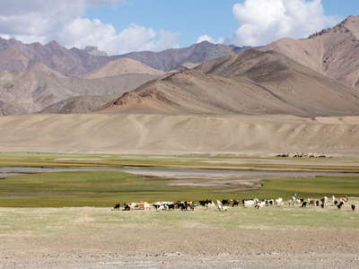 Murghab Valley with livestock
