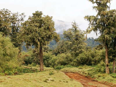 Mount Kenya NP  |  Montane rainforest