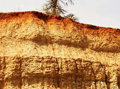 Murchison Falls NP  |  Soil profile