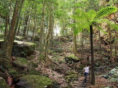 Katoomba  |  Temperate rainforest with tree fern
