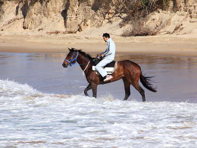 Coffs Harbour  |  Boambee Beach with horse