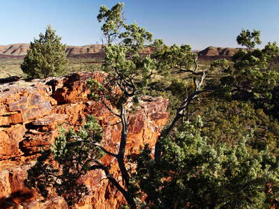 Serpentine Gorge outlook with Callitris