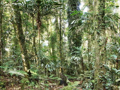 Lamington NP  |  Subtropical rainforest