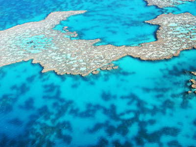 Great Barrier Reef  |  Hook Reef