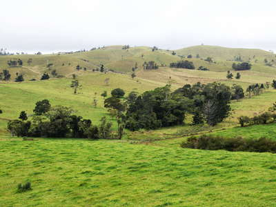 Atherton Tablelands  |  Pasture land