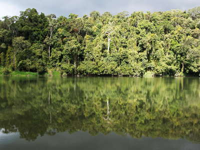 Kuranda  |  Rainforest reflecting in Barron River