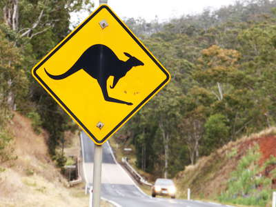 Atherton Tablelands   |  Kangaroo sign