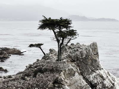 Seventeen Mile Drive  |  Lone Cypress