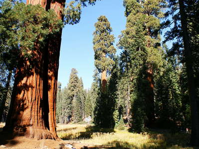 Sequoia NP  |  Sierra redwood and meadow