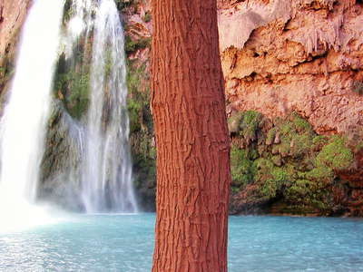 Havasu Canyon  |  Havasu Falls with tree