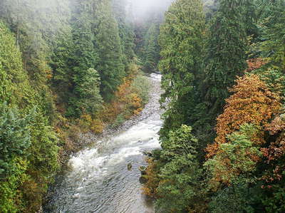 North Vancouver  |  Capilano River and mixed forest