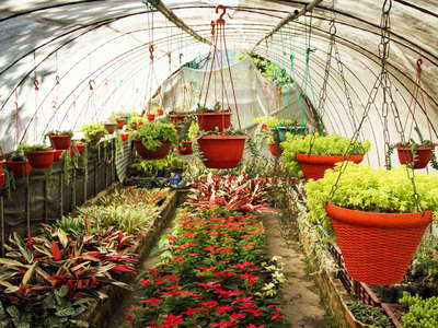 Kalimpong  |  Horticulture