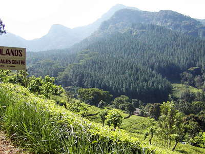 Knuckles Mountain Range with Midlands Tea Estate