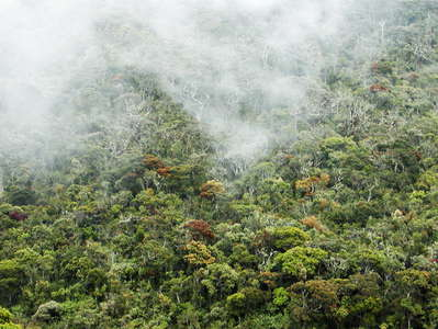 Horton Plains NP  |  Cloud forest