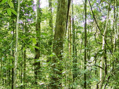 Sinharaja Forest Reserve  |  Tropical rainforest
