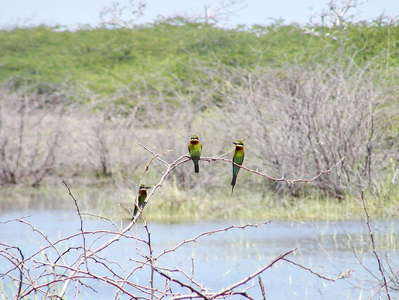 Bundala NP  |  Bird life