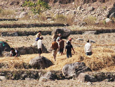 Lesser Himalaya  |  Traditional farming