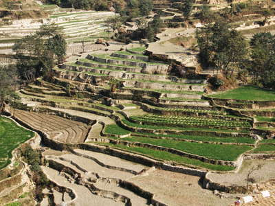 Lesser Himalaya  |  Terraced farmland