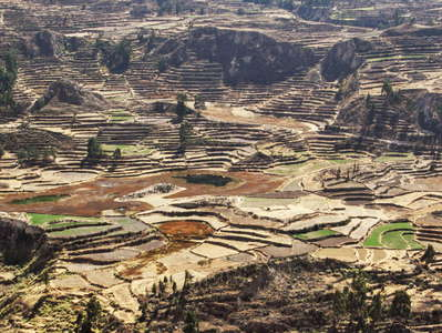 Valle del Colca  |  Terraced farmland