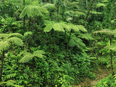 Morne Trois Pitons NP | Ravine with tree ferns