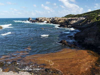 La Caravelle Peninsula | Rocky bay with Sargassum seaweed