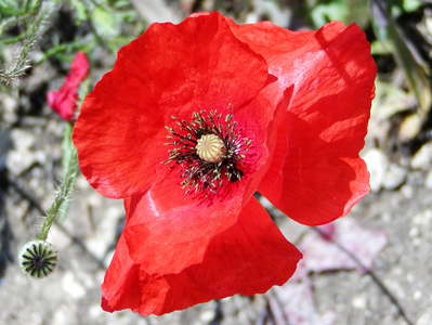 Cavagrande del Cassibile | Poppy