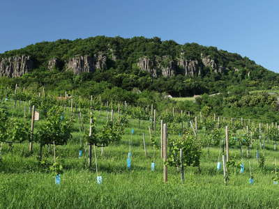 Badacsony with vineyard