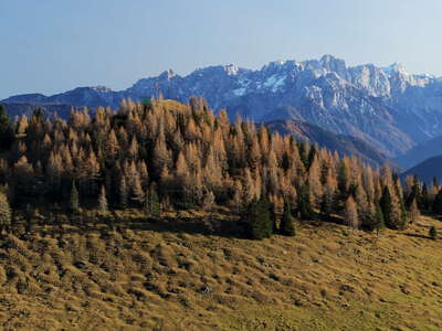 Dobratsch | Humpback meadow and mountain forest